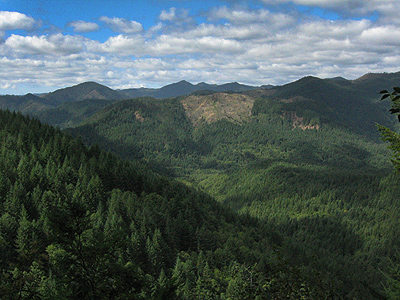 TillamookStateForest
